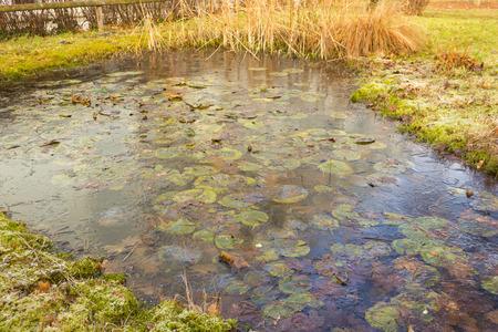 Frozen garden pond