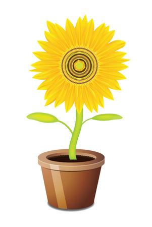 Sonnenblume auf einen isolierten Hintergrund