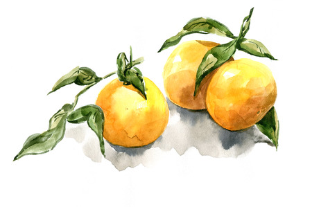 realism: tangerines watercolor realism Stock Photo