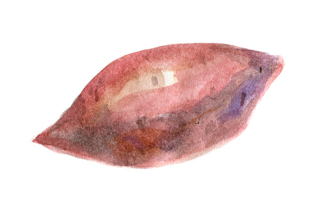 Yams. Watercolor illustration. Isolated.