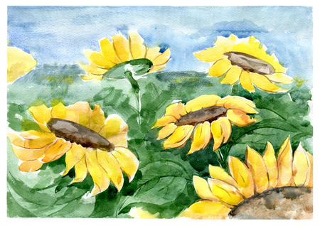 Sunflowers on the field. Watercolor. Stok Fotoğraf