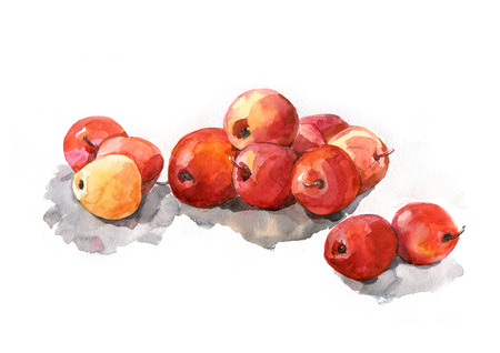 Red apples on white background, watercolor, realism