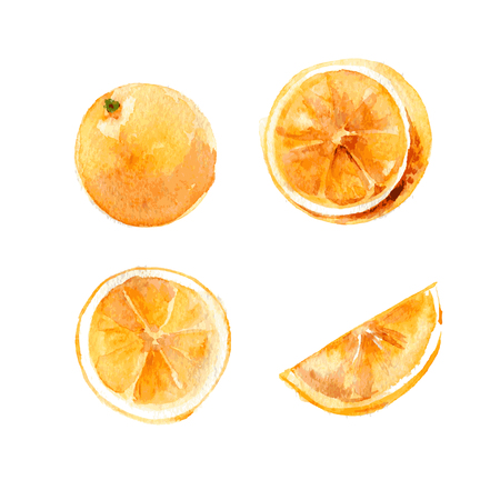 Set of whole and cut oranges on a white background. Watercolor illustration. Isolated. Vector.