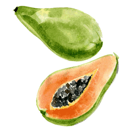 Delicious papaya, painted in watercolor on a white background. Vector