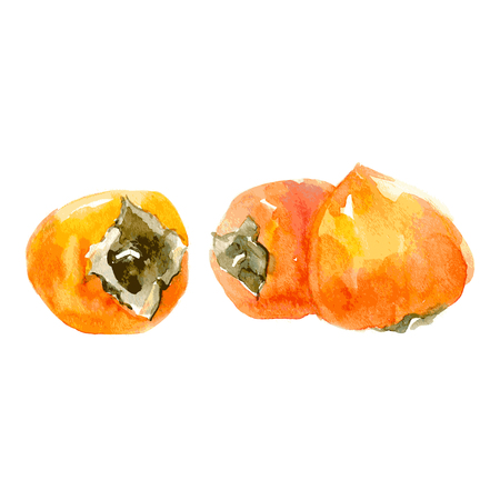 Juicy orange persimmon. Watercolor illustration Isolated on white background. Vector
