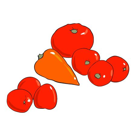 Set of red tomatoes and pepper. Hand drawn vector illustrarion isolated on white background