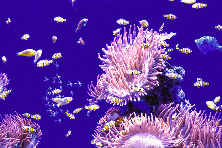 underwater world: underwater world Stock Photo