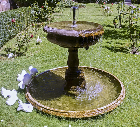 scorching: doves at the fountain