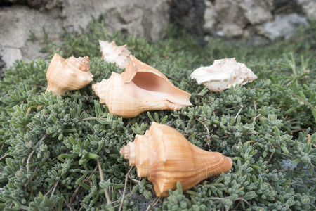look what there is on the beard of Jupiter ... the shells! Banco de Imagens