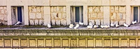 inseparable: white doves Stock Photo