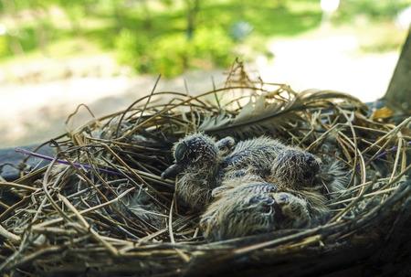 bird nest Reklamní fotografie