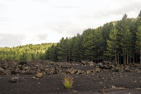 lava front at Piano Provenzana Reklamní fotografie