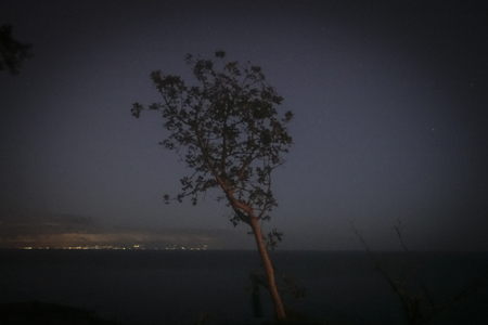 lonely tree in the night - 145