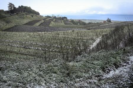 vineyard in winter - 34