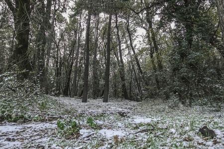 forest under the snow - 36 Reklamní fotografie