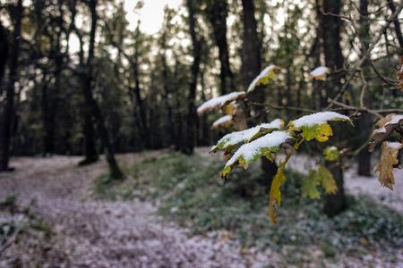snowy chestnut grove - 38 Reklamní fotografie