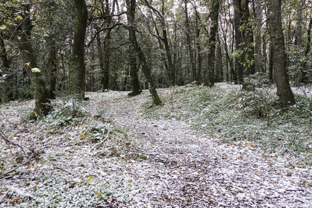 snowy chestnut grove on the slopes of Etna - 39