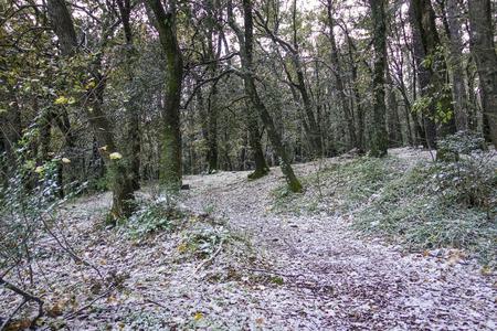 snowy path in the chestnut grove - 40 Reklamní fotografie