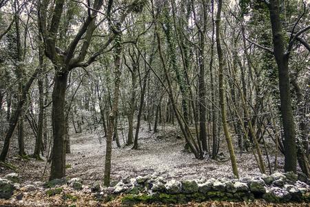 castagneto on the slopes of Etna - 44 Reklamní fotografie