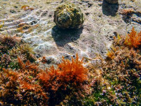 hermit crab (140)
