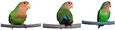 parrots Standard-Bild