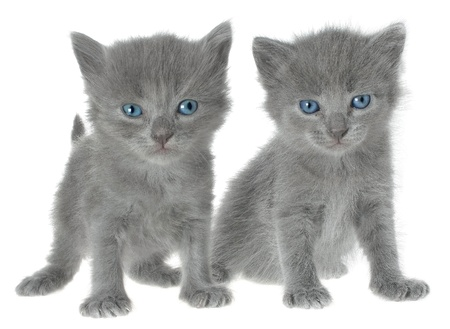 two kittens on a white background. Stock Photo