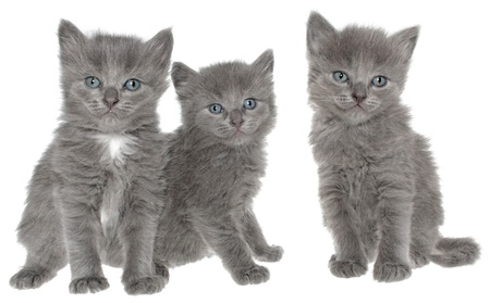 Three kittens on a white background.