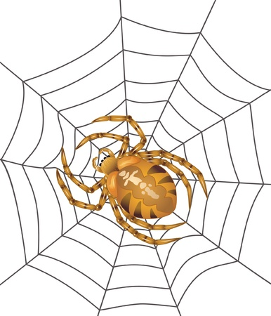 Spider in centre of the web isolated. Vector