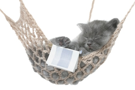 Cute gray kitten sleep in hammock with open book on a white background.  photo
