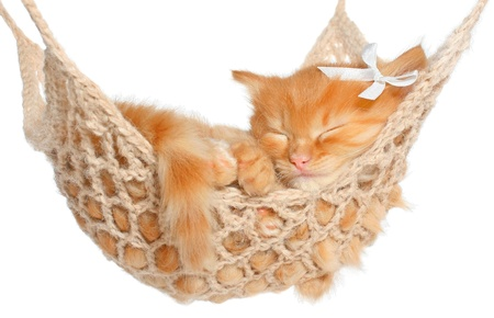 Cute red-haired kitten sleeping in hammock on a white background.