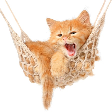 Cute red-haired kitten in hammock on a white background. Stock Photo - 18010714