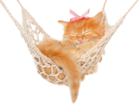 Cute red-haired kitten sleeping in hammock on a white background