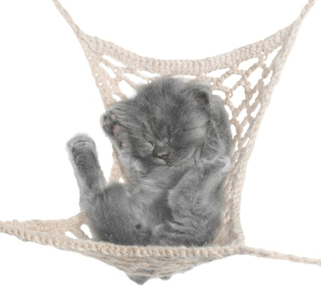 Cute gray kitten sleeping in hammock top view on white background. Stock Photo