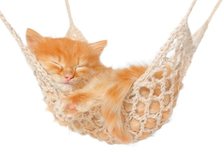 kitten small white: Cute red haired kitten sleeping in hammock on a white background.