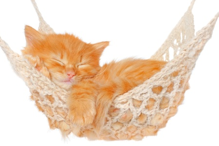 Cute red haired kitten sleeping in hammock on a white background. photo