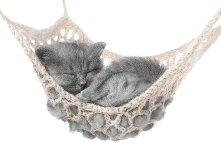 Cute gray kitten sleeping in hammock on white background.