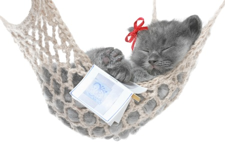 Cute gray kitten sleep in hammock with open book on a white background.  Stock Photo