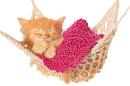 sleeping animals: Cute red haired kitten sleeping in hammock on a white background.