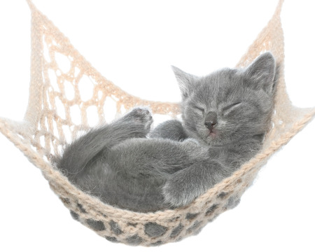 Cute gray kitten sleeping in hammock on a white background.