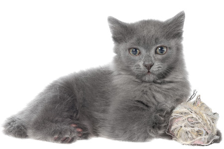 lays down: Small kitten playing with a ball of yarn on white background. Stock Photo