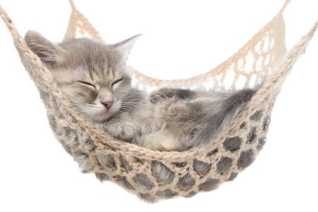 Cute striated kitten sleeping in hammock on a white background.