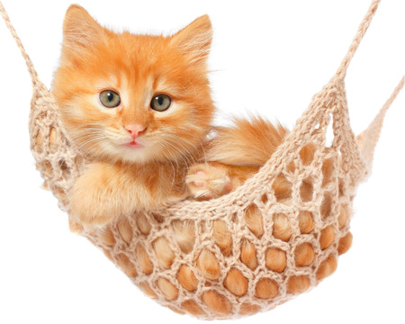 Cute red haired kitten lay in hammock on a white background. Archivio Fotografico