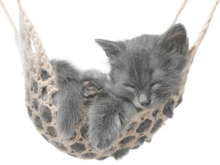 Cute gray kitten sleeping in hammock on white background.