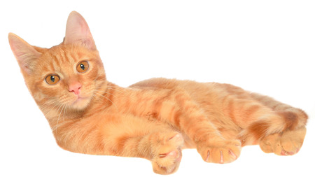 carroty: Orange kitten lay on a side view on a white background Stock Photo