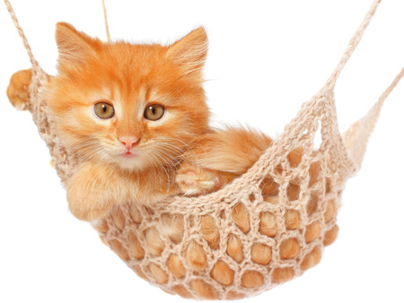 red haired: Cute red haired kitten lay in hammock on a white background. Stock Photo
