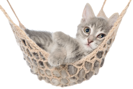 striated: Cute striated kitten sleep in hammock on a white background. Stock Photo