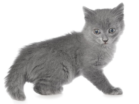 frisky: Frisky small kitten isolated on white background. Stock Photo