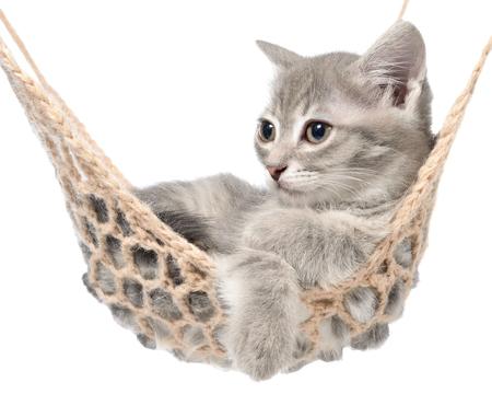 striated: Cute striated kitten sleeping in hammock on a white background.