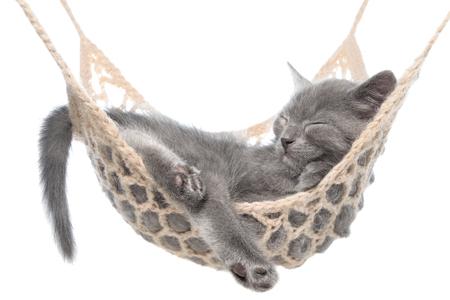 Leuke grijze katjesslaap in hangmat die op een witte achtergrond wordt geïsoleerd. Stockfoto