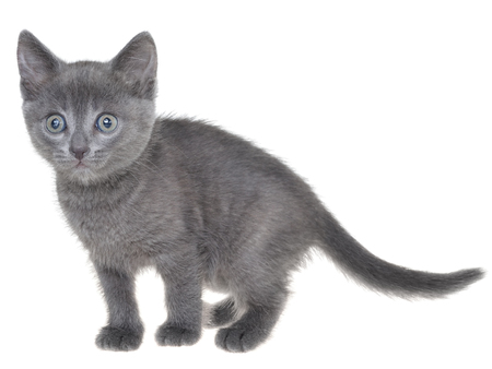 Cute kitten playing isolated on a white background